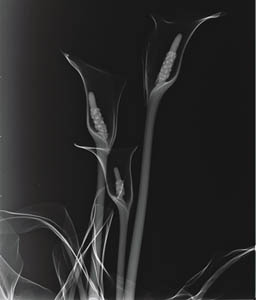 x ray photography art