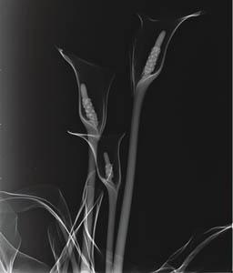x ray photography art