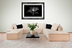 Living Room with Magnolia Xray